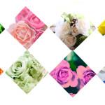 色によって違う!バラの花言葉と豆知識まとめ(赤・青・ピンク・白・黄色etc..)