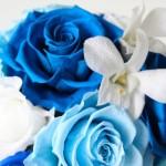 青いバラの花言葉とまつわる豆知識・贈り物についてまとめ!