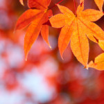 11月の服装について気温と地方別まとめ【東京・大阪】