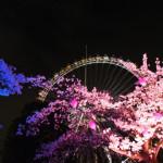 夜桜に持っていくものやあると便利な持ち物まとめ